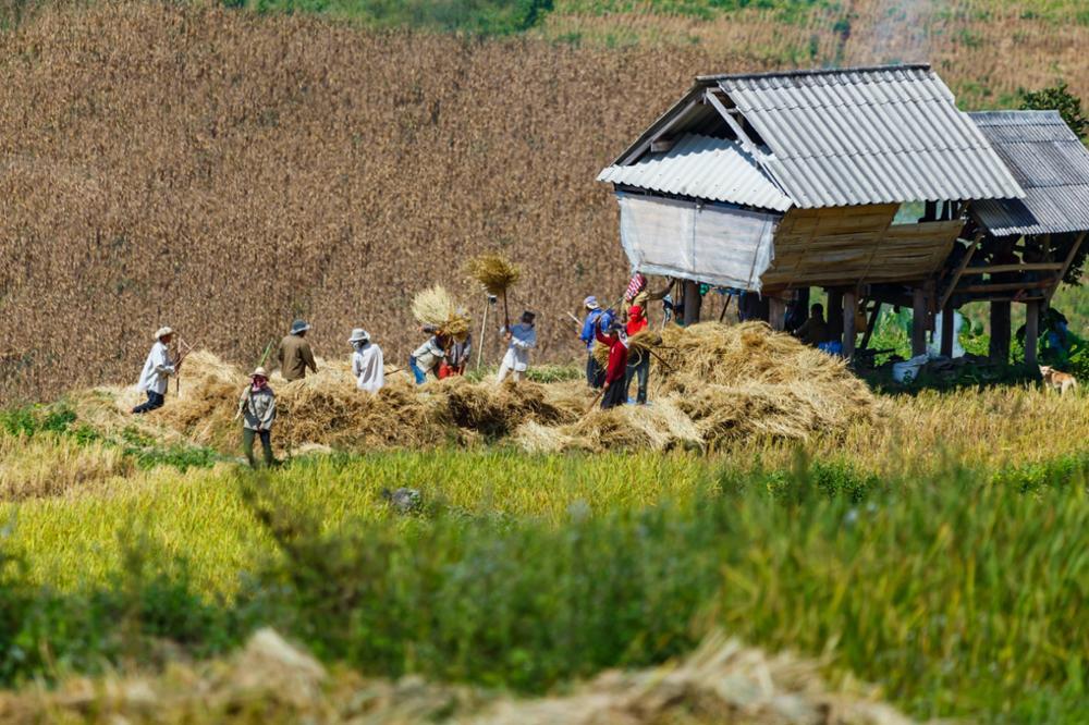 Séjour à Ban Pa Pong Pieng dans les plus belles rizières en terrasse de Thaïlande