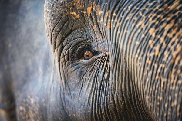 Voir les éléphants en Thaïlande : 5 refuges et sanctuaires responsables